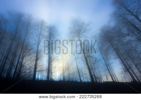 group of trees with no leafs, casting shadows  in a blue and yellow misty light and a foggy atmosphere generating a mistery and somehow cold feeling
