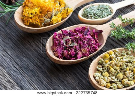 Herbs on spoons on a wooden background with copy space. Fresh rosemary and thyme, dried calendula, horsetail, rose petals, chamomile.