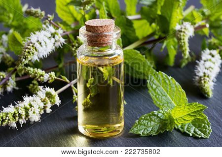 A bottle of peppermint essential oil with fresh blooming peppermint twigs