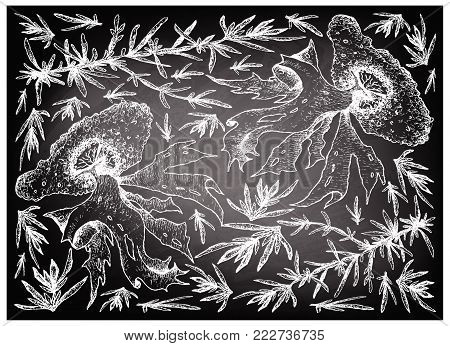 Sea Vegetables, Illustration Background of Hand Drawn Sketch Hijiki and Nori Seaweed on Black Chalkboard. High in Calcium, Magnesium and Iodine.