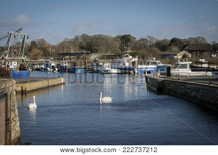 LYMINGTON, NEW FOREST, HAMPSHIRE, UK, JANUARY 2018 - View of the harbour and swans at Lymington, New Forest, Hampshire, UK