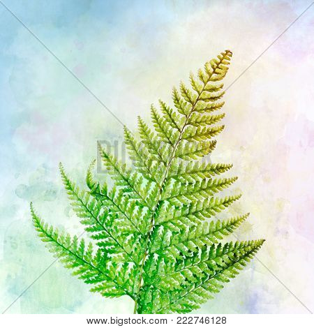A digital watercolor rendition of fern plant leaves.