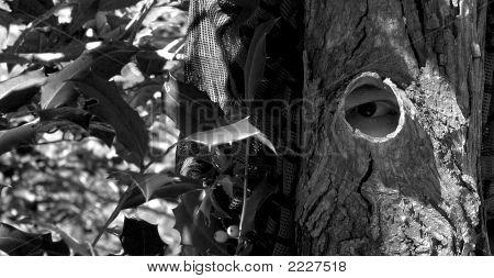 Tree Camouflage