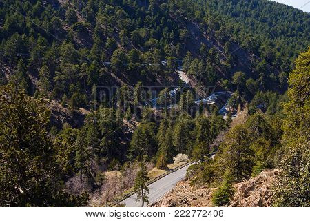 Winding mountain road on the slopes covered with coniferous forest on a sunny day. Troodos, Cyprus.
