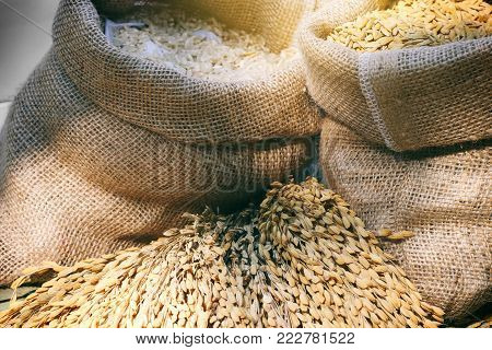 paddy rice and rice seed in a bag with rice pile background