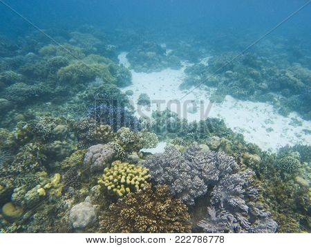 Coral landscape on tropical sea bottom. Young coral reef ecosystem. Coral reef animals. Exotic island lagoon snorkeling and diving. Tropical seashore underwater photo. Coral reef undersea landscape