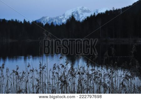 snow mountain in the dawn ,snow mountain reflected in a lake at dawn,reeds in the down