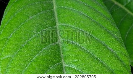 A beautiful closeup nature view of a green leaf in the garden.