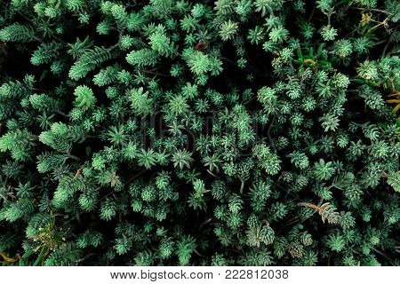 Close up of beautiful green plant background.