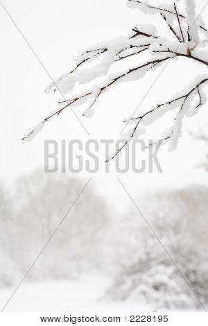 Woodland Snow Scene