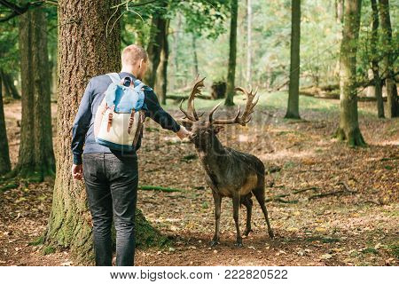 A volunteer with a backpack feeds a wild deer in the forest. Caring for animals.