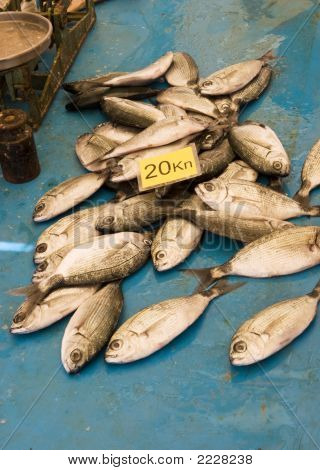 Small Fish For Sale