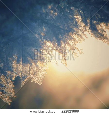 Big Snow At Sunset. Macro Snow. Snowflakes Of Large Size. The Snow Shines In The Sun. Beautiful Back