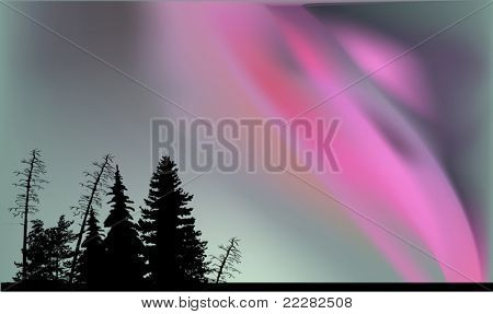 illustration with trees silhouettes under aurora