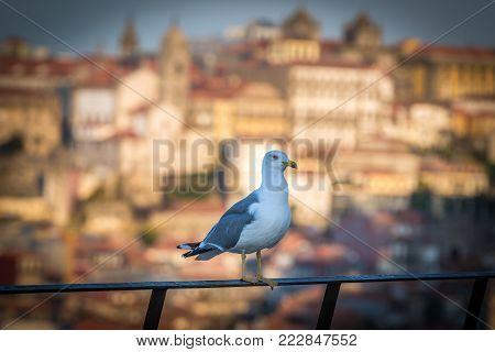 Mew in Vila Nova de Gaia city, Portugal. Porto city on background poster