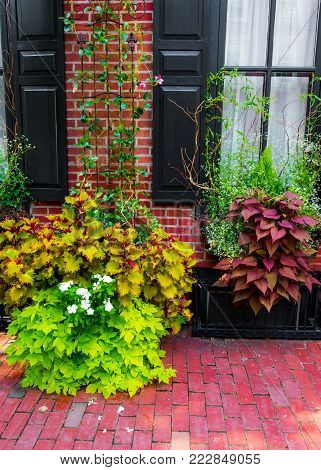 Colorful plants on the exterior of this home in Lambertville NJ.