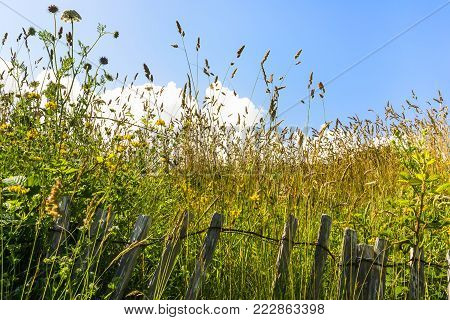 travel to France - green meadow glasses under blue sky in Ploumanac'h site of Perros-Guirec commune on Pink Granite Coast of Cotes-d'Armor department in the north of Brittany in sunny summer day