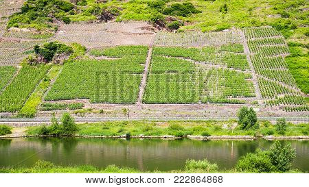 country landscape - green vineyards on hill slope along Mosel river in Cochem - Zell region on Moselle wine route in sunny summer day in Germany