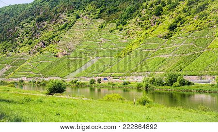 country landscape - road and vineyards on hill slope along Mosel river in Cochem - Zell region on Moselle wine route in sunny summer day in Germany