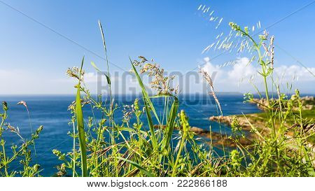 travel to France - green grass on coastline of English Channel in Saint-Guirec area of Perros-Guirec commune on Pink Granite Coast of Cotes-d'Armor department in north of Brittany in summer morning