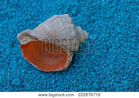 large empty sea shell on blue fine sand