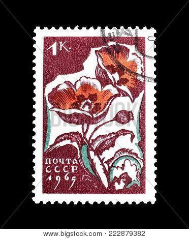 SOVIET UNION - CIRCA 1965 : Cancelled postage stamp printed by Soviet Union, that shows Poppies.