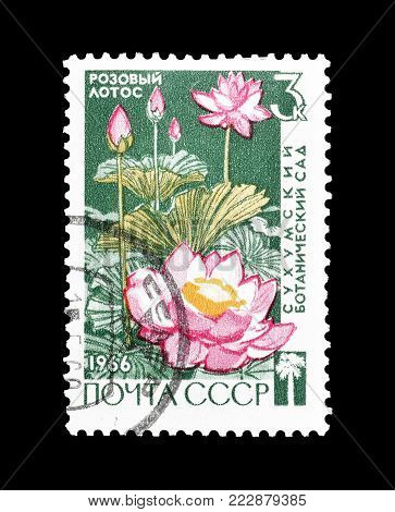 SOVIET UNION - CIRCA 1973 : Cancelled postage stamp printed by Soviet Union, that shows Pink lotus.