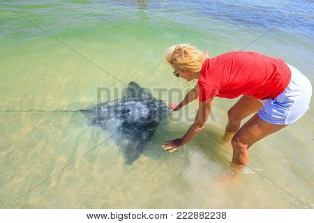 Blonde woman approaches an Australian Eagle Ray close to shore in Hamelin Bay, Margaret River Region, Western Australia. Hamelin Bay is one of best places in Australia to spot wild sting rays up close