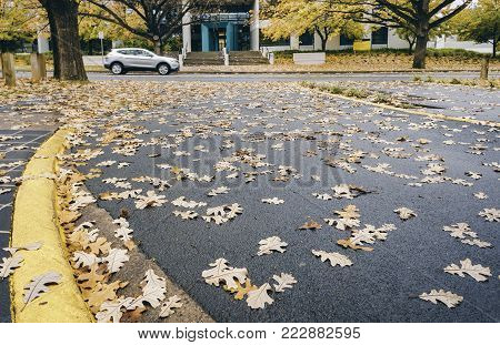 Canberra, Australia - Apr 26, 2017: Oak leaves in autumn colors fallen by the roadside along National Circuit. A car passes by on an overcast day.