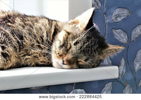 An concept Image of a slepping cat on the windowsill