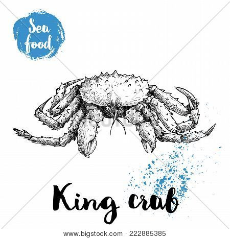 Hand drawn sketch king crab with big thorns. Seafood vector illustration for menu, restaurants or markets.