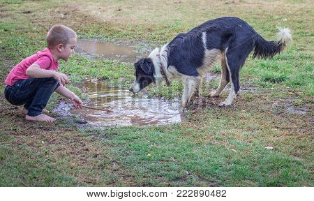 Young boy playing with pet dog in mud puddle outdoors in yard