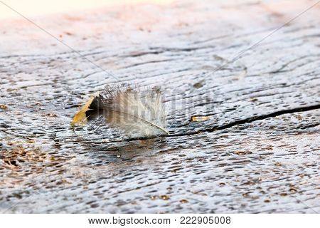 The Feather fell on the wooden floor