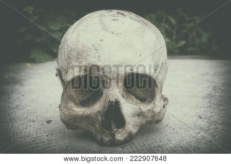 Real human skull on the background gray surface.