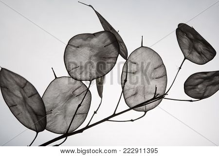 Unusual leaves with a tip in backlight. Texture of leaves isolated on white background. ecological style, natural materials.branch with leaves