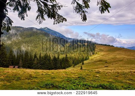 Beautiful scenery in Carpathian mountains. Forested hill at cloudy day in springtime with framing. Beautiful Ukrainian mountaniuos landscape. Mountains, hills and gorgeus Ukrainian nature.