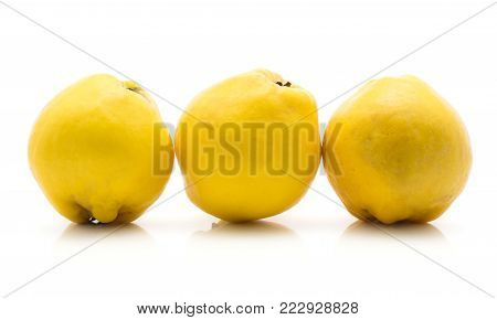Three yellow quinces in row isolated on white background raw ripe