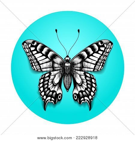 Tattoo beautiful butterfly for your shoulder. Realistic butterfly in blue circle. Black and white tattoo. Sketch of butterfly