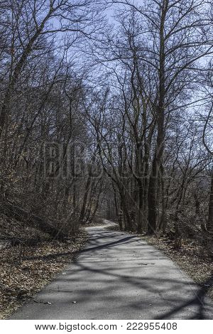 winding path through the woods at Brandywine Creek State Park in Wilmington, Delaware