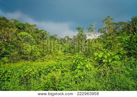 Tropical green landscape of the Sumatra island in Indonesia