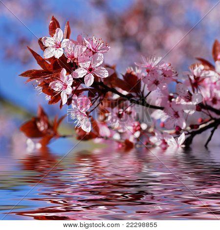 Decorative cherry tree blossoms