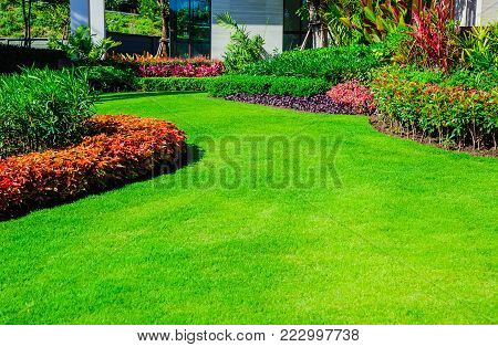 Green lawn, the front lawn for background, Garden landscape design, Design background