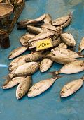 A number of small fish freshly caught for sale at 20 kuna per kilo at a fish market in Split Croatia poster