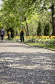 Sidewalk under gentle fallen petals of cherry blossoms, sakura tree. Selective focus. Cleaners sweep the park, keeping in mind ideal cleanliness. Blurred vertical background poster