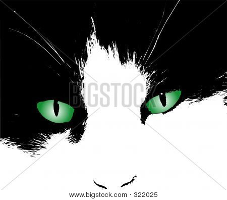 cats eyes staring poster