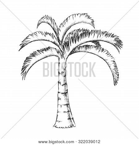 Palm Jamaican Coconut Tropical Tree Ink Vector. Jungle Large Palm Cocos Nucifera. Warm Climate Wild