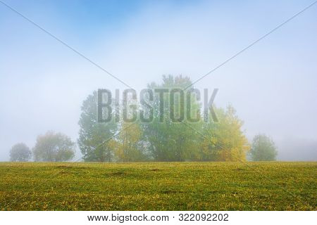Tall Trees On The Grassy Meadow On A Foggy Morning. Wonderful Early Autumn Scenery. Great Nature Vie