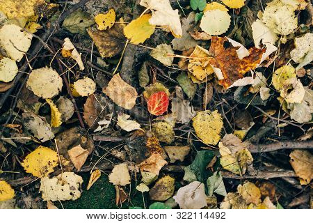 Autumn Leaves. Beautiful Fall Yellow And Red Leaves  On Ground In Forest, Top View. Autumnal Backgro
