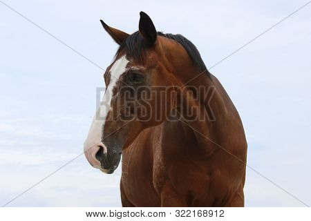 Blurred Image Of A Horse Over Blue Sky Background. Brown Horse, Close Up. Horse Outdoors. A Horse Wi
