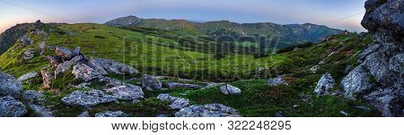 Carpathian Morning Summer Panorama View With Rhododendron Flowers, Chornohora, Ukraine.